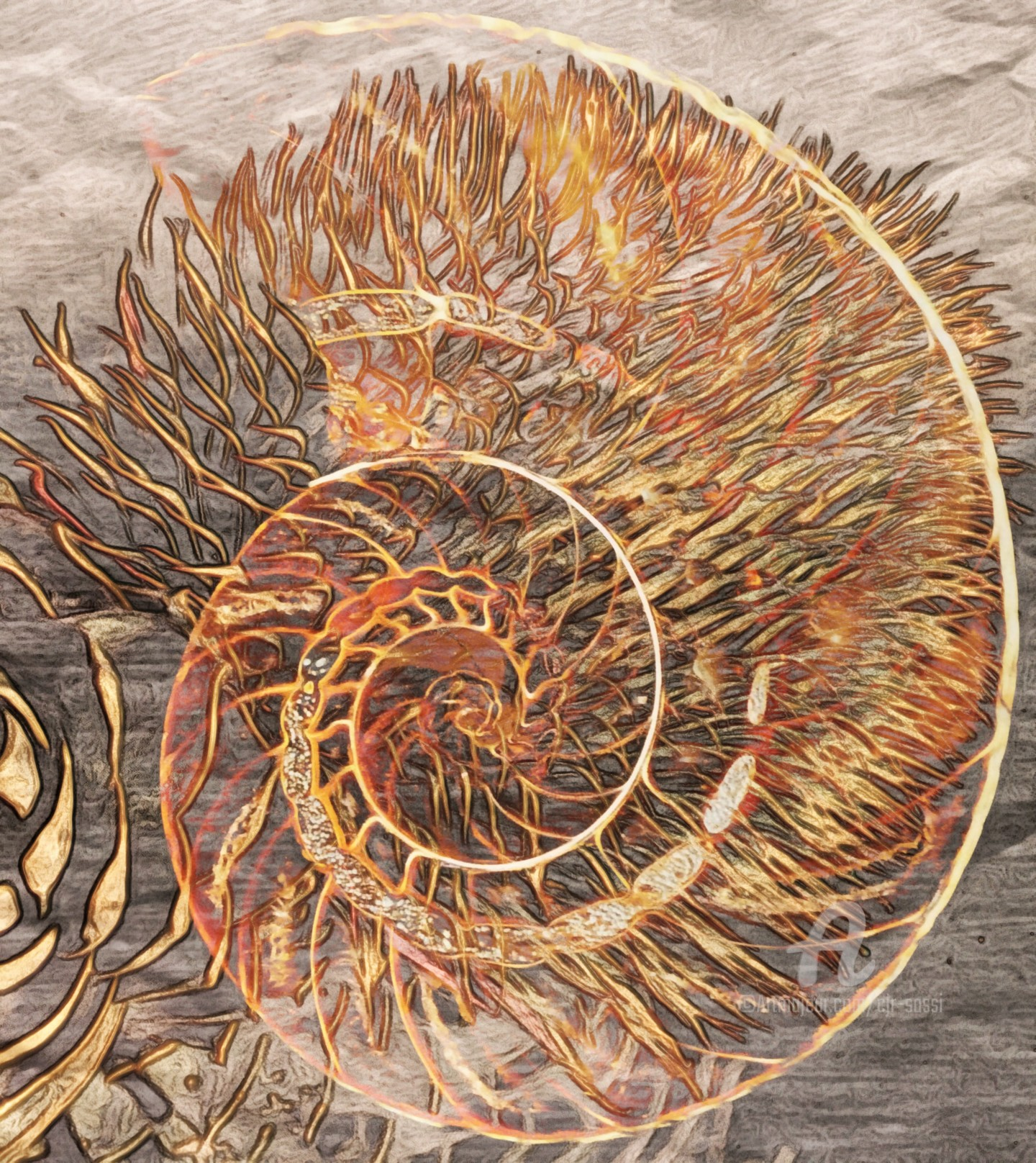Cjr Sassi - Nautile en couleur ambre